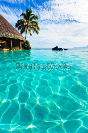 palme haengen ueber infinity pool