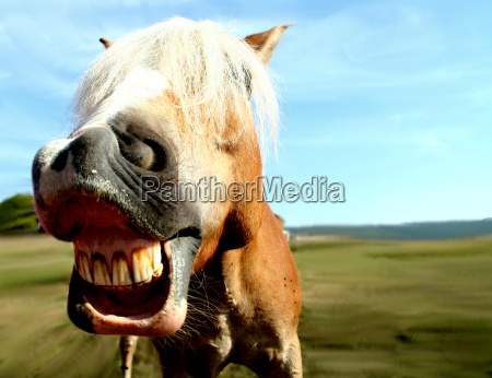 pferdegrimasse - 2718131