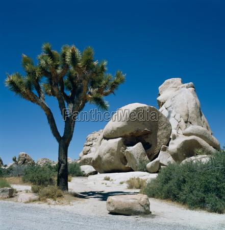 joshua tree national park californien usa