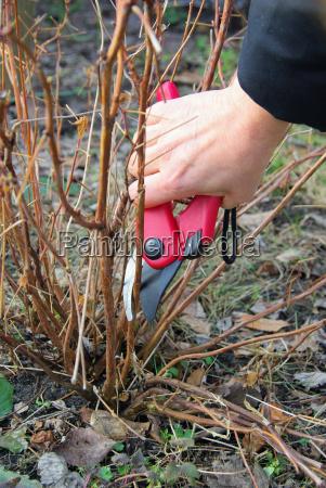 strauch verschneiden shrub cutting 07