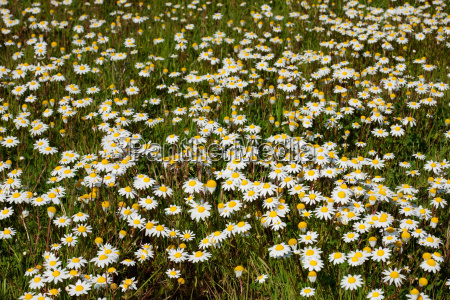 many flowers on the grass
