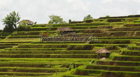 reisfelder bali indonesien