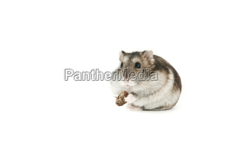 hamster getrennt