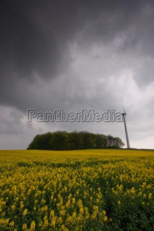 coleseed rape field wind energy scenery