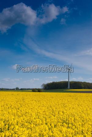 pinwheel on a field of rape