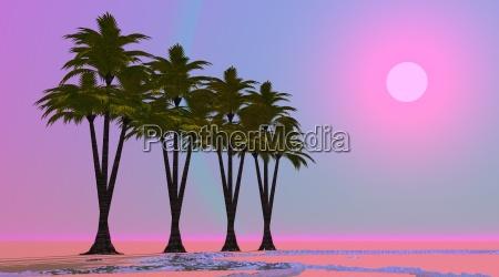 violet oase