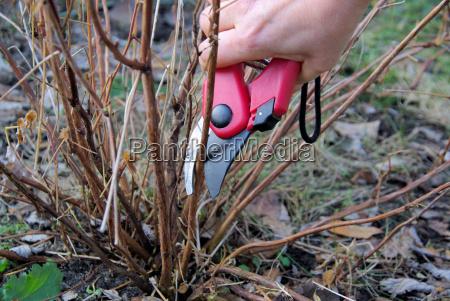 strauch verschneiden shrub cutting 06
