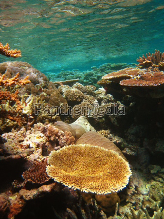 unterwasserszene des great barrier reef