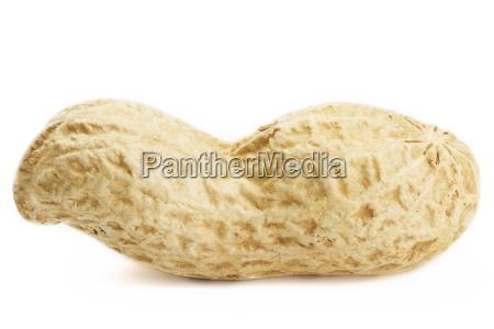peanut macro