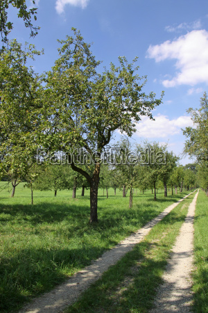 walk through the orchard
