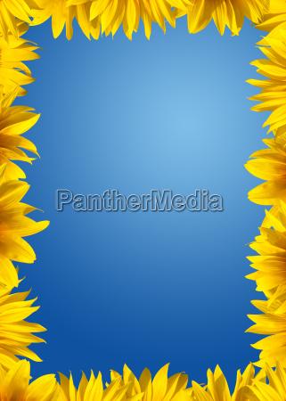 sommer sommerlich blume sonnenblume pflanze orangefarben