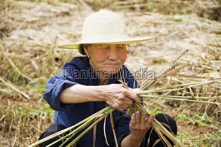 landwirt der ein buendel von weizen