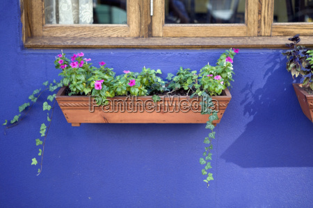 potted plants under a window