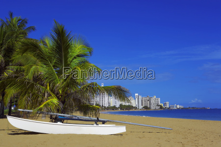 boat near palm trees on the