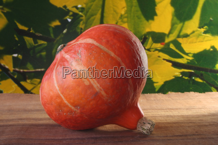 orange food aliment fruit halloween pumpkin