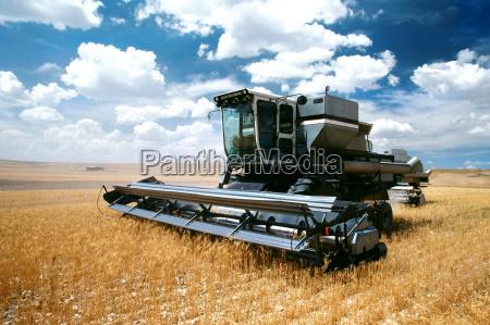 custom harvest combine harvest wheat near