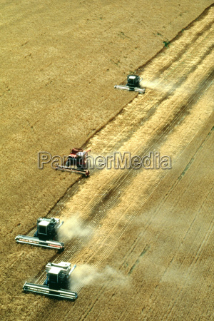 aerial view of combines harvest wheat