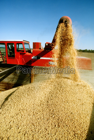 close up of combine loading soy