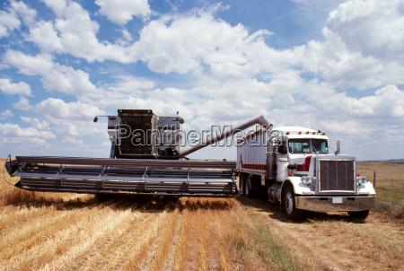custom harvest combine harvest wheat combine