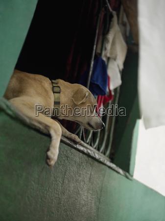 close up of a dog lying