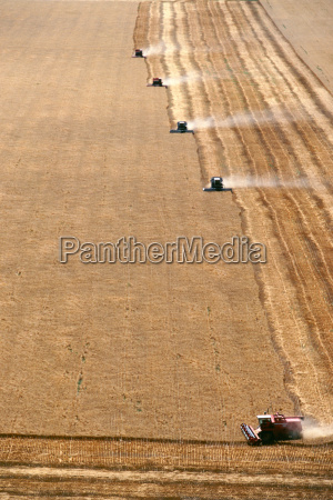 aerial view of wheat harvest and