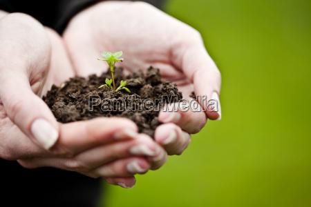 hand die eine frische junge pflanze