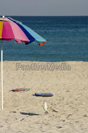 hochwinkelansicht eines vogels am strand miami
