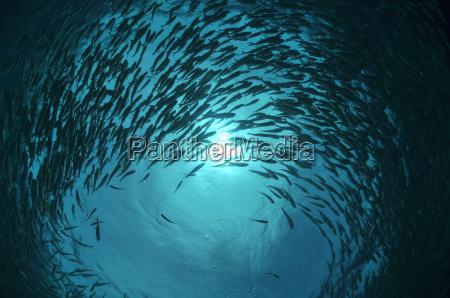 fische im gegenlicht
