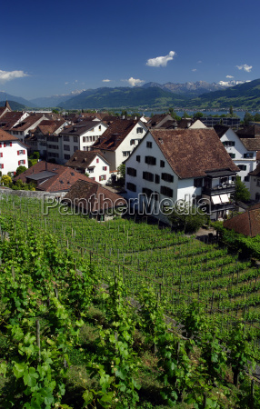 vineyard in rapperswil