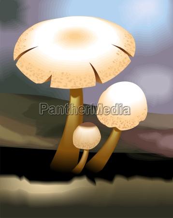 mond pilz schwammerl champignon himmel firmament
