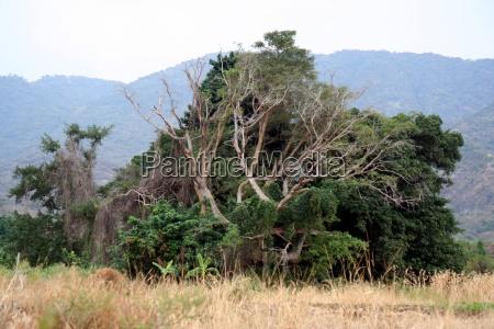 rainforest in kenya
