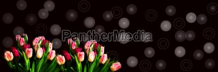 tulpen mit retromuster