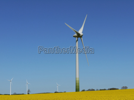 rape field wind energy wind engine