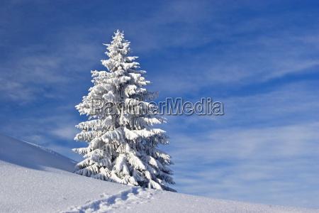 fussspur durch die winterlandschaft