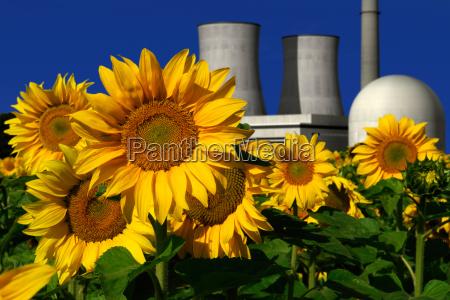 atomkraftwerk hinter einem sonnenblumenfeld