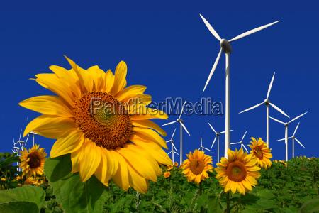 windkraftraeder hinter einem sonnenblumenfeld