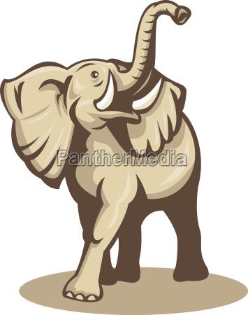 afrikanische bull elefant aufladen angreifenden