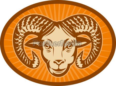 bighorn schafe oder ram