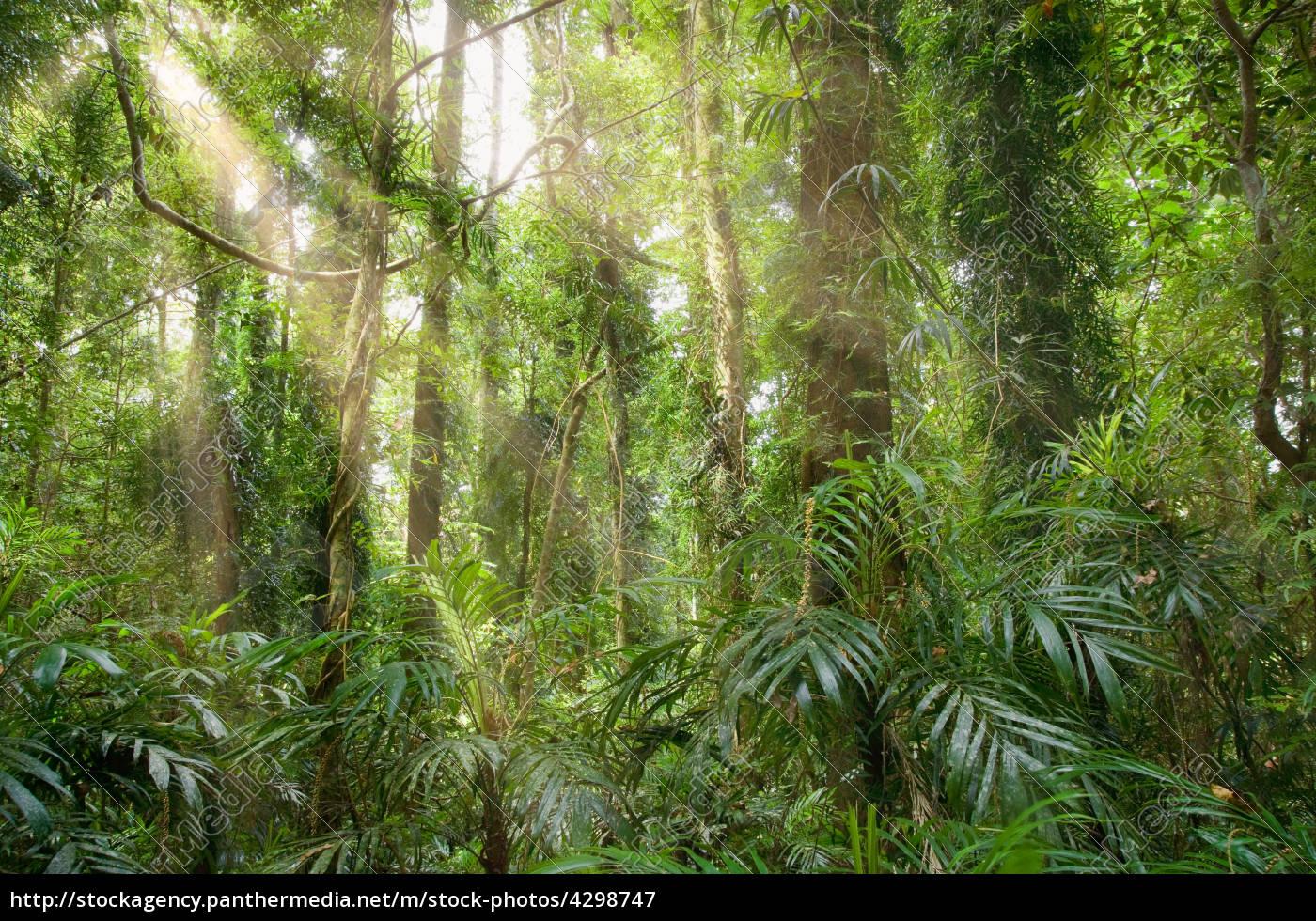 licht, im, regenwald - 4298747