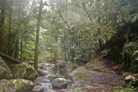 rain forest
