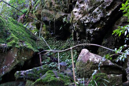 path, through, the, rainforest - 4299299