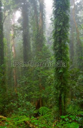 rain, forest - 4299431