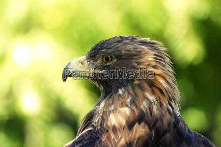 tier vogel fauna wild flaumfeder feder