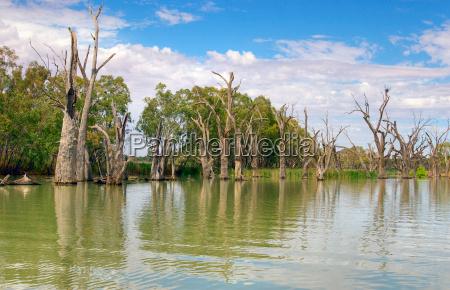 dead river trees