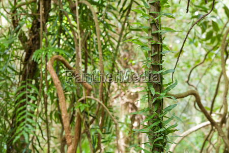 beauty, of, the, rainforest - 4336377