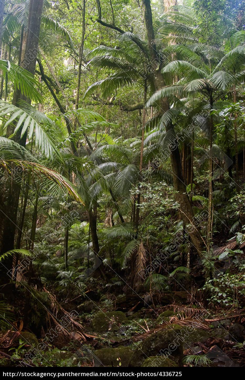 rain, forest - 4336725