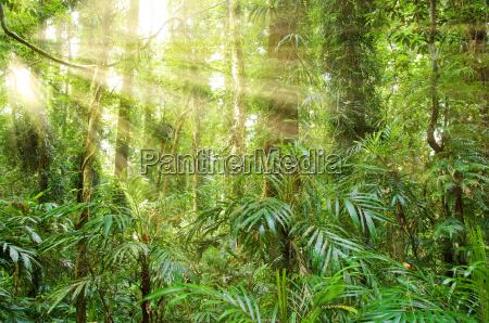 sunlight, in, dorrigo, world, heritage, rainforest - 4336385
