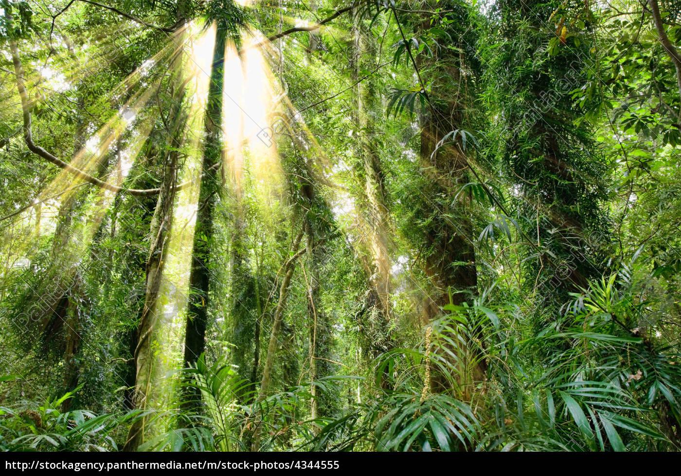 sonnenlicht, in, dorrigo, weltkulturerbe, regenwald - 4344555