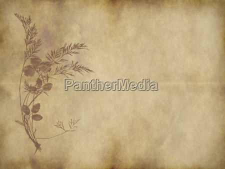 old paper or parchment