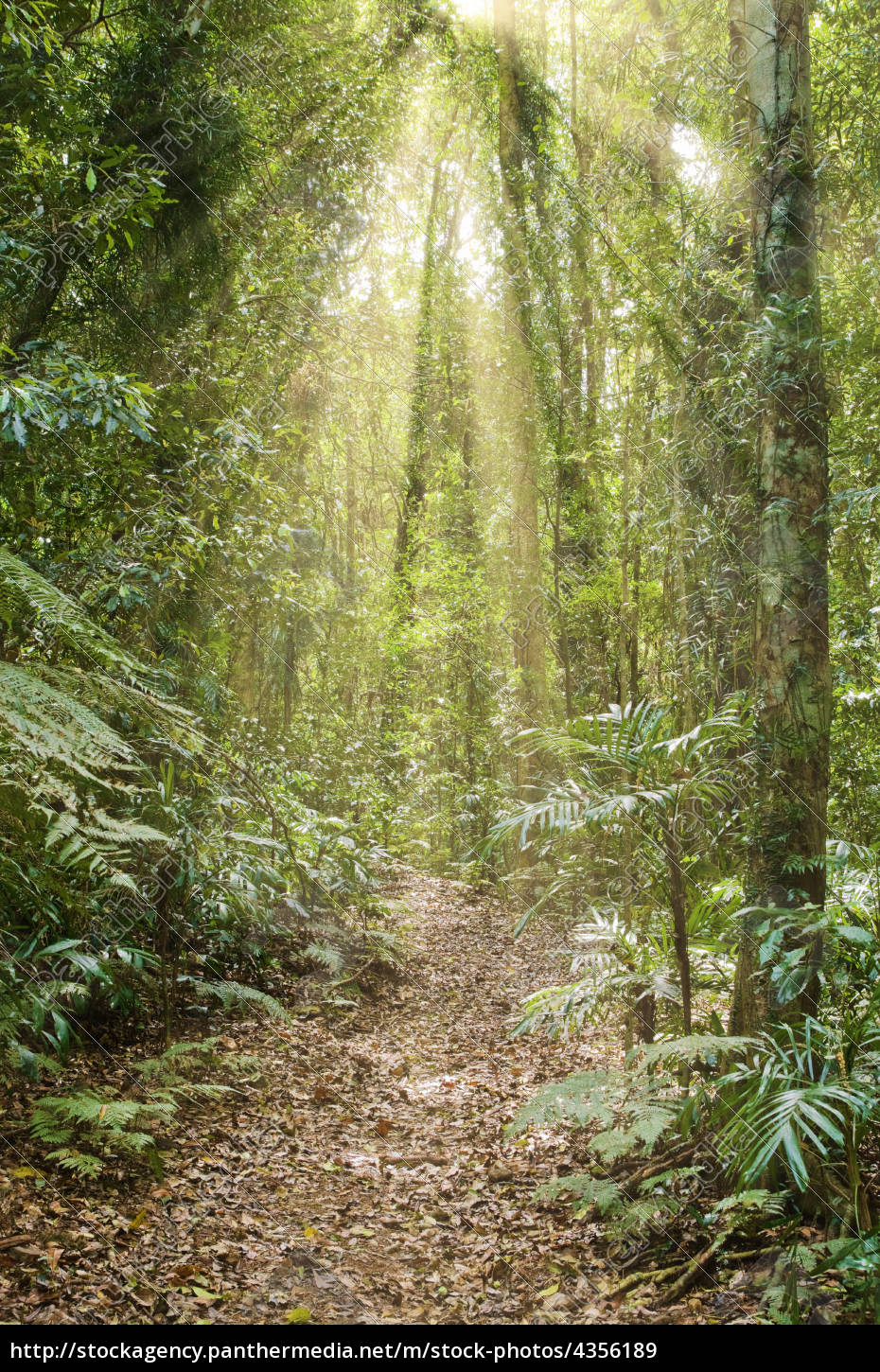rays, of, light, in, the, rainforest - 4356189